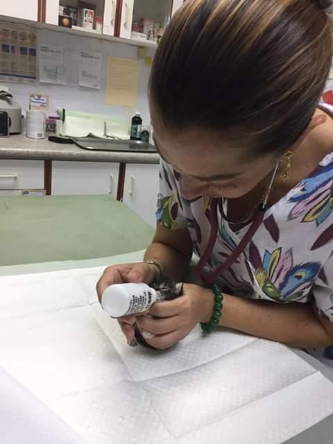 Dra. Gina García. Foto: Cortesía