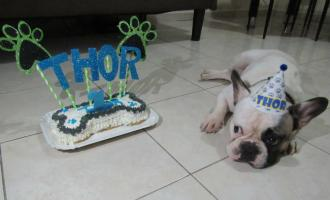 Thor en su cumpleaños. Foto: Cortesía